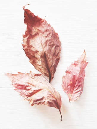 Color Inspiration #2 - Autumn Leaves